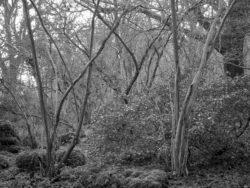 180105 Sea Wood 054