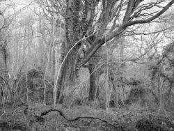 180105 Sea Wood 123