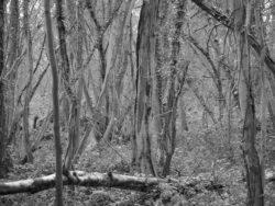 180105 Sea Wood 144