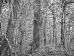 180105 Sea Wood 179