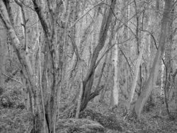180105 Sea Wood 192