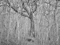 180105 Sea Wood 236