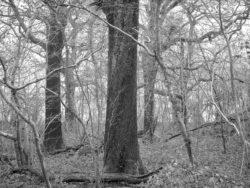 180105 Sea Wood 244