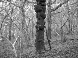 180105 Sea Wood 257
