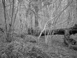 180105 Sea Wood 279