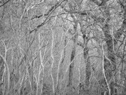 180105 Sea Wood 286