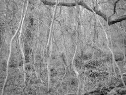 180105 Sea Wood 288