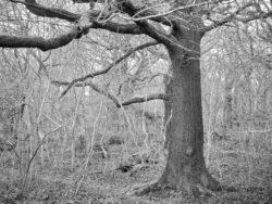 180105 Sea Wood 299