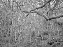 180105 Sea Wood 302