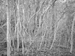 180105 Sea Wood 308
