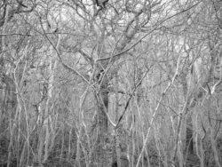 180105 Sea Wood 314