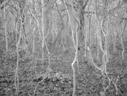 180105 Sea Wood 315