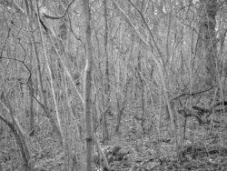 180105 Sea Wood 335