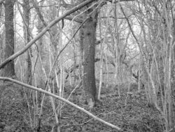 180105 Sea Wood 348