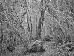 180105 Sea Wood 355