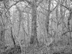 180105 Sea Wood 375