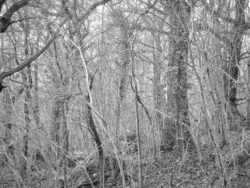 180105 Sea Wood 382