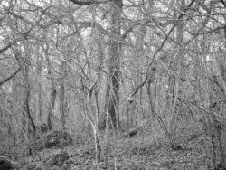 180105 Sea Wood 391