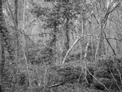 180105 Sea Wood 395