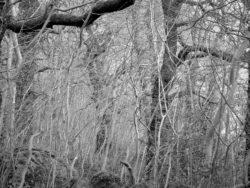 180105 Sea Wood 403