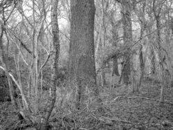 180105 Sea Wood 410