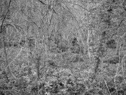 180105 Sea Wood 492