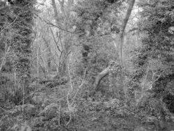 180105 Sea Wood 494