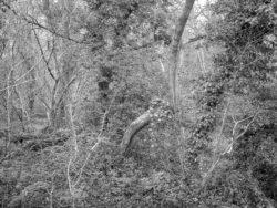 180105 Sea Wood 501