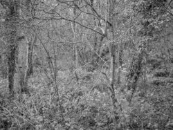 180105 Sea Wood 509