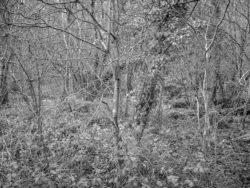 180105 Sea Wood 511