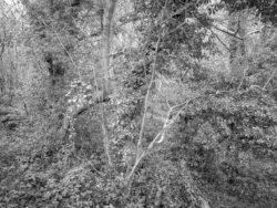 180105 Sea Wood 514
