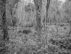 180105 Sea Wood 537