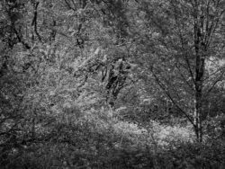 180501 Thetford Forest afternoon 575