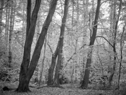180501 Thetford Forest afternoon 613