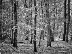 180501 Thetford Forest afternoon 634 1