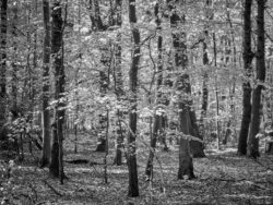 180501 Thetford Forest afternoon 634