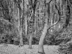 180501 Thetford Forest afternoon 700