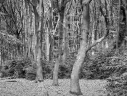 180501 Thetford Forest afternoon 702