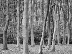 180501 Thetford Forest afternoon 703