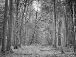 180501 Thetford Forest afternoon 729