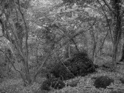 180807 Sea Wood 02