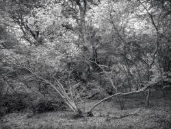 180807 Sea Wood