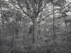 180807 Sea Wood 3