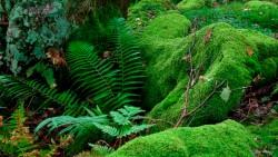 Birk Dault Wood  3