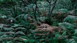 Birk Dault Wood  8
