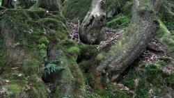 Low Wood  11
