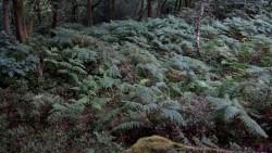 Low Wood  12