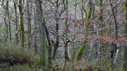 Low Wood 121121   1