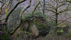 Low Wood 121121   11