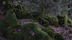 Low Wood 121121   14